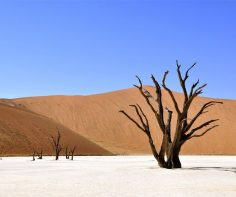Photograph of the week: Deadvlei, Namib-Naukluft National Park, Namibia