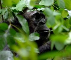 The best places to see primates in Africa